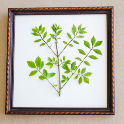 DIY Pressed Botanical Art